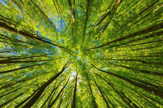 12 Tipps für nachhaltiges Campen