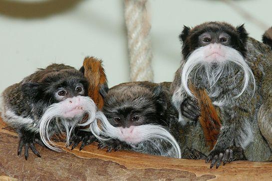Tierisch was los: Zoos und Tiergärten im Campingurlaub erleben