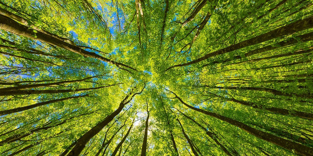 <span>12 Tipps für nachhaltiges Campen</span>