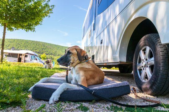 Camping mit Hund – das solltest du wissen