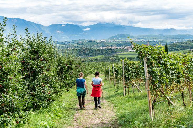 Entspannte Weinwanderung